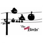 geek-shirts shirtcity angry-birds-t-shirt-p1c31s1a1_d1i51989p889799z5r1c2f0