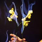 bi-orchid-2