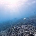 Google SeaView Great Barrier Reef 1