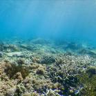 Google SeaView Great Barrier Reef 10