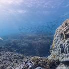 Google SeaView Great Barrier Reef 3