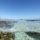 Google SeaView Great Barrier Reef 4