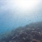 Google SeaView Great Barrier Reef 5