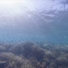 Google SeaView Great Barrier Reef 7
