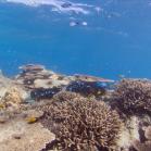 Google SeaView Great Barrier Reef 8
