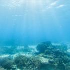 Google SeaView Great Barrier Reef 9