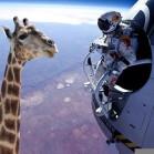 felix-baumgartner-giraffe