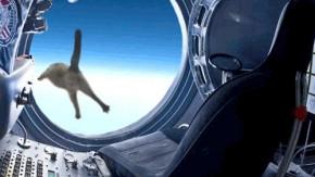 Felix Baumgartner: Vom Rekordspringer zum Internet-Meme [Bildergalerie]
