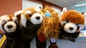 Hausbesuch bei Mozilla: Mega-Ausblick und Kuscheltier-Alarm [Bildergalerie]
