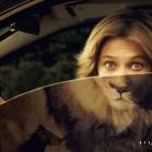 printwerbung zoo safari