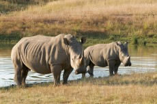 Schutz und zur Bestandsüberwachung der Nashörner in Kenia. (Foto: © Peter Maszlen – Fotolia.com)