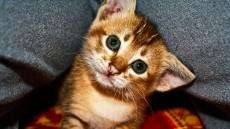 Denk dran: Jeder billige Kommentar tötet ein Kätzchen.