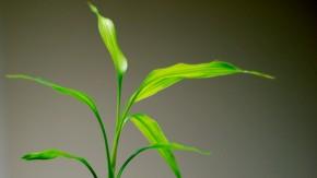 Grün macht glücklich: Warum Pflanzen im Büro die Produktivität erhöhen