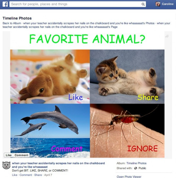 Newsfeed: Facebook ist kein Fan von Memes, Link- und Like-Baiting. (Screenshot: Facebook)