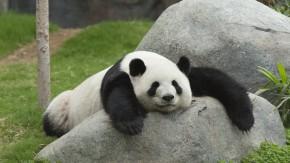 Google Panda 4.2 rollt und rollt und rollt