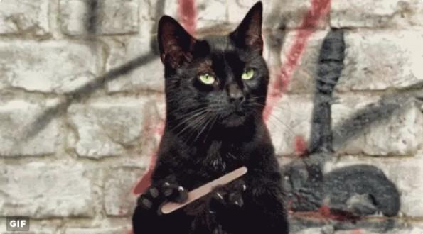 Oha: Katzen-GIFs bei t3n.