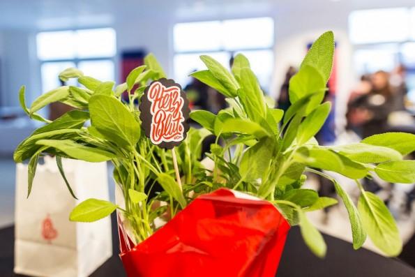 Tischpflanzen wirken gleich doppelt: Sie steigern die Produktivität und schärfen die Sinne. (Foto: t3n.de)