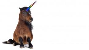 RydeMyPony: Das Startup-Unicorn, das an wirklich ALLEN vorbeizieht [hub conference]
