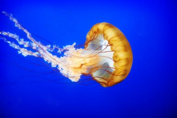 """Die App """"Jelly"""" wird neu aufgelegt. (Foto: Shutterstock.com)"""