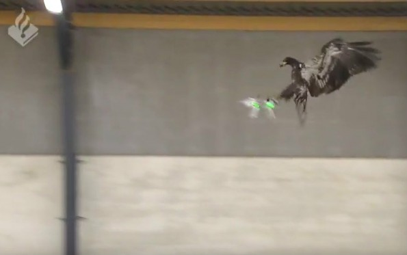 Adler holen Drohnen aus der Luft. (Screenshot: YouTube/Polizei Niederlande)