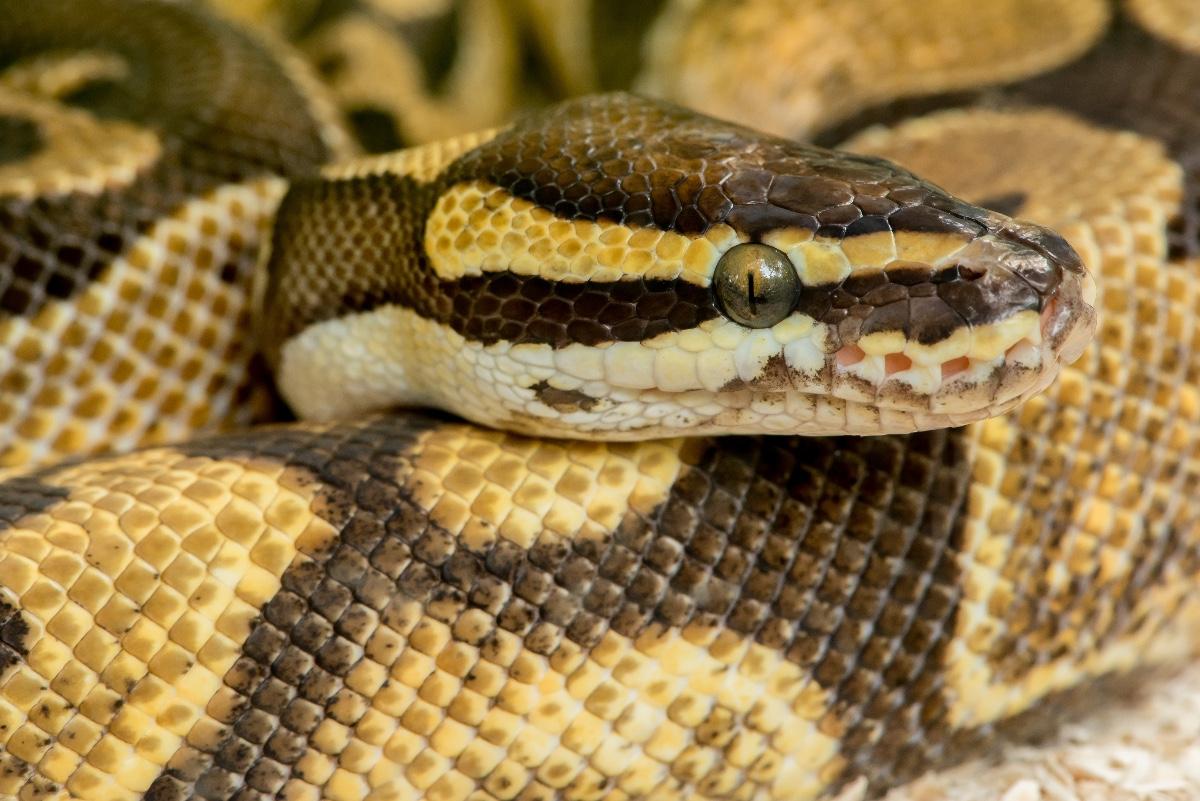 Crash-Kurs mit Python und Machine Learning: Einstieg in Scikit-Learn ...