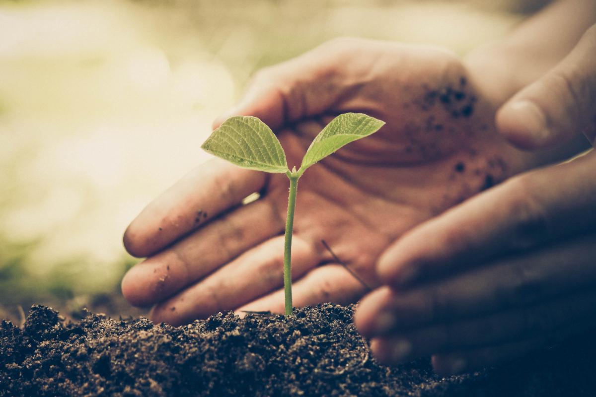 Nachhaltigkeit in Deutschland: Unternehmen müssen sich mit langfristigen Auswirkungen ihres Wirtschaftens auseinandersetzen