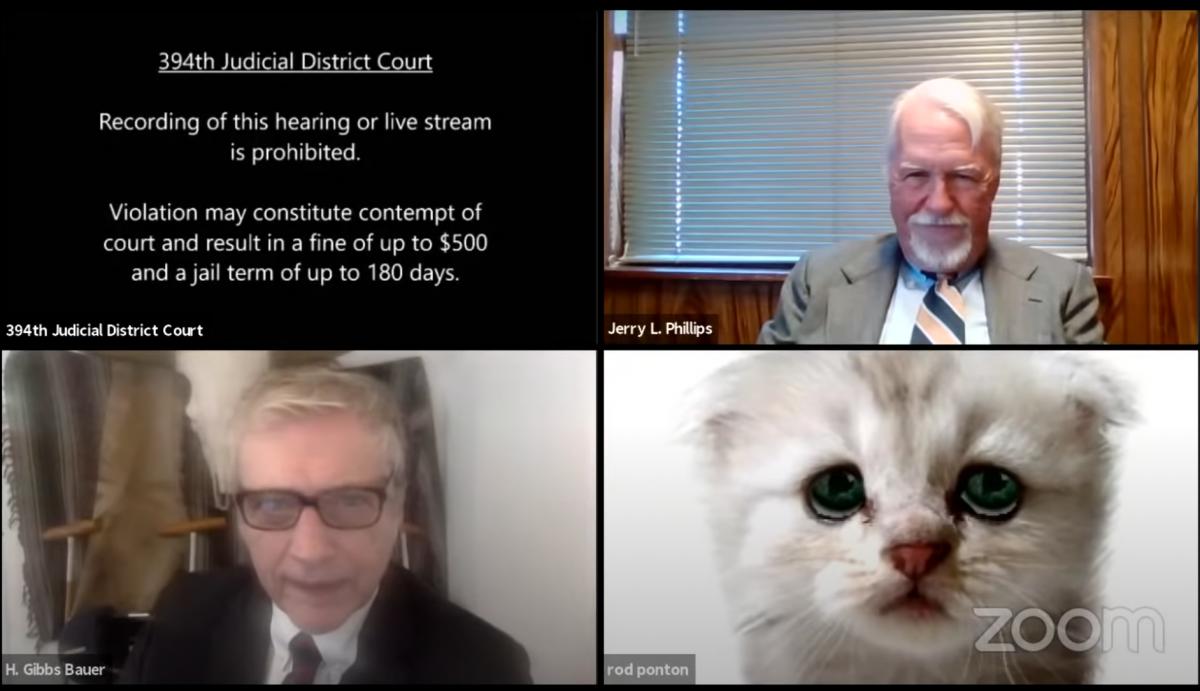 In dubio pro miau – Anwalt wird während Verhandlung durch Zoomfilter zum Kätzchen